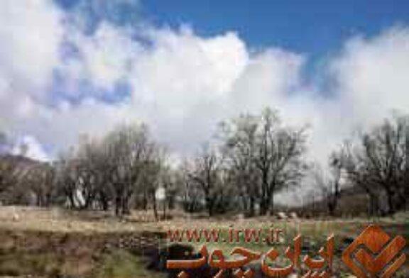 کشف چوب قاچاق در لردگان ۳۵۰ درصد رشد داشت