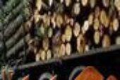 ۶ تن چوب قاچاق در شهرستان رشت کشف شد