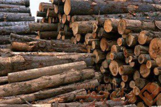 روسیه تامینکننده بیش از ۹۵ درصد چوب وارداتی ایران