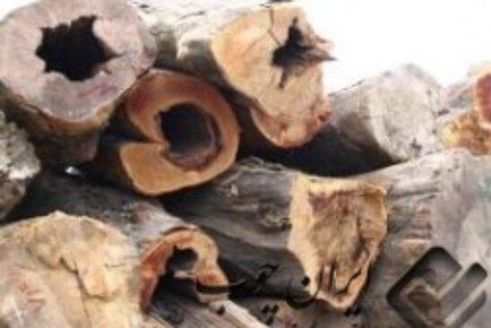 استفاده از چوب و فرآورده های چوبی در بهینه سازی مصرف انرژی