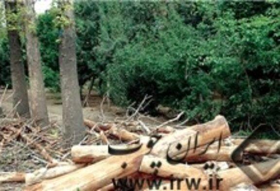 انقراض جنگلها معضلی برای تهیه چوب مورد نیاز درودگران