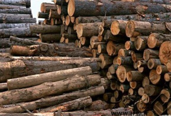 پروپوزال بررسی وضعیت بازرگانی چوب در ایران و امکان صادرات مصنوعات چوبی
