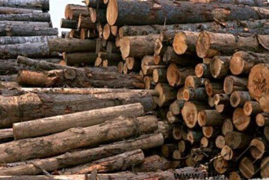 توانمندی استان فارس در زراعت چوب