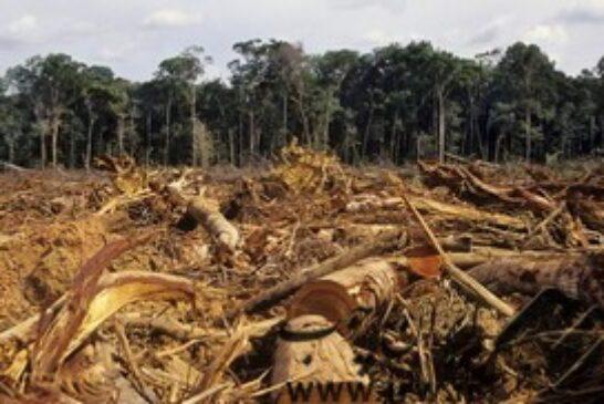 بازداشت ۱۵۵ قاچاقچی چوب درخت در میانمار