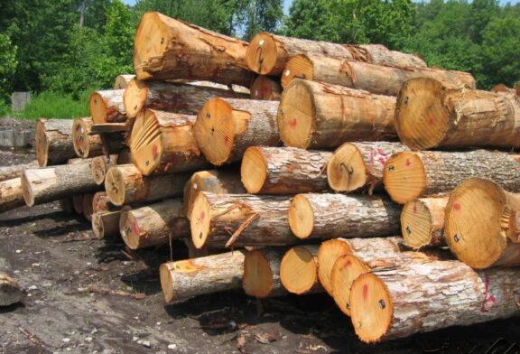روسیه خواهان واردات تولیدات چوب و کاغذ مازندران است