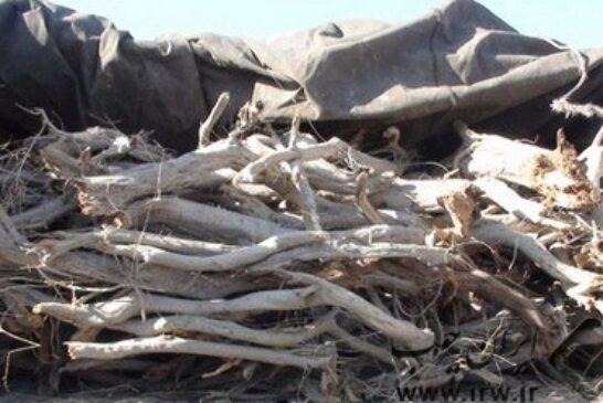 توقیف ۱۲ تن چوب تاغ در اردستان
