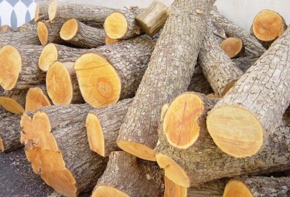 کشف ۲۳ اصله درخت جنگلی با ارزش از قاچاقچیان چوب