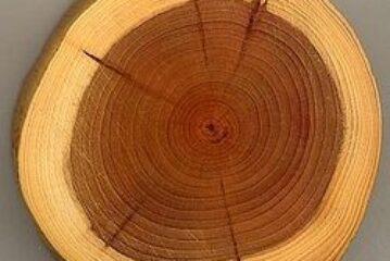 خریدوفروش چوب حمیدی