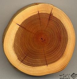 ۲۵۰px-Taxus_wood