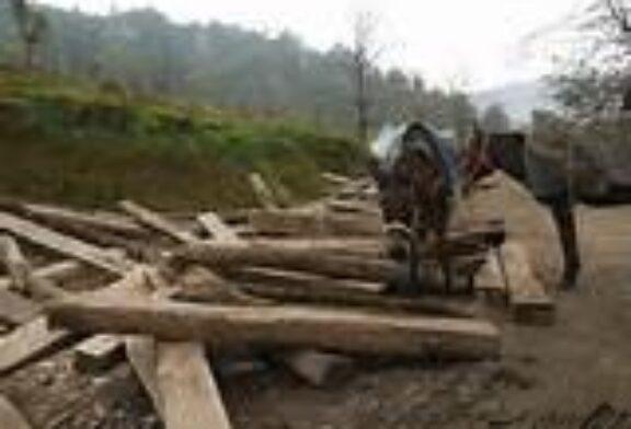 برداشت سالانه ۱۵۰ هزارمترمکعب چوب از جنگل های گلستان