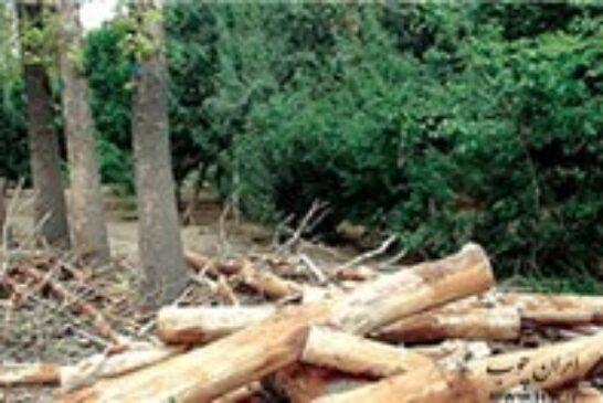 کشف چوب قاچاق کم یاب در ماسال