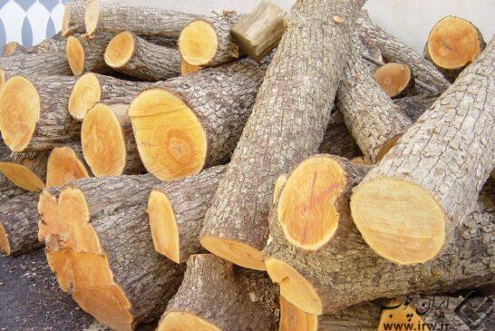 کشف چوب قاچاق راش به ارزش ۵۰ میلیون ریال در دامغان