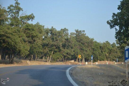 صدها درخت ۵۰۰ ساله بلوط قلع و قمع شد