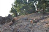 قاچاق چوب و تداوم نگرانیها