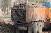 قاچاق چوب تهدید برای جنگلهای طارم