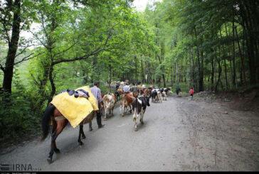 نگرانی جنگلنشینان مازندران پس از ثبت جنگلهای هیرکانی
