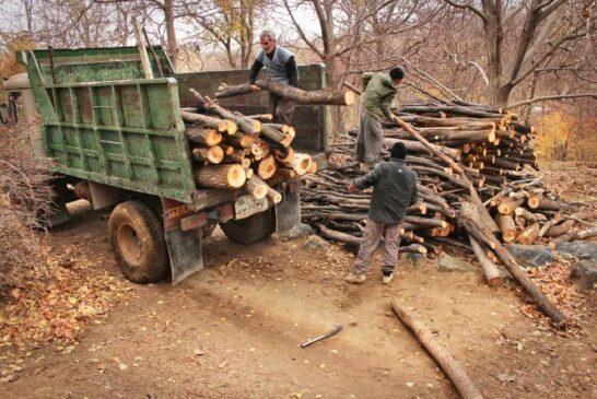 نابودی جنگلها در صنعت چوب ایران