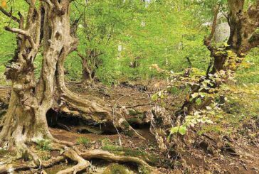 انتقاد سازمان جنگلها از مجوز سدسازی در جنگلها