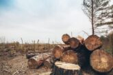 قاچاق در کهگیلویه و بویراحمد به چوب بلوط رسید؛ روزهای ناخوش جنگلهای زاگرس