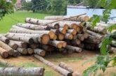 واردات چوب و مساله حفظ جنگلها در مازندران