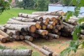 استاندارد ISO جدید در حمایت از استفاده ی مسئولانه از چوب منتشر شد