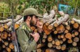 کشف بیش از ۵۰ تن چوب قاچاق در رضوانشهر