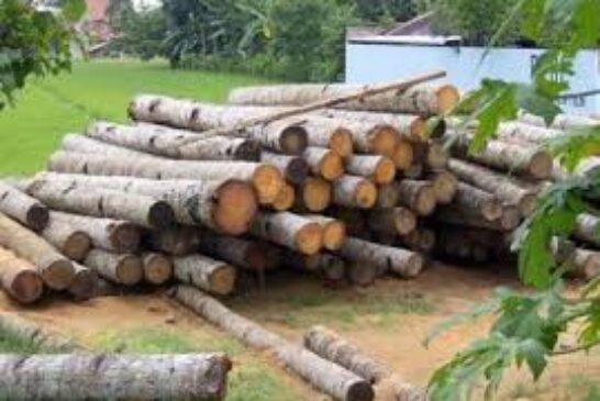 اجرای طرح توسعه زراعت چوب در اراضی گیلان