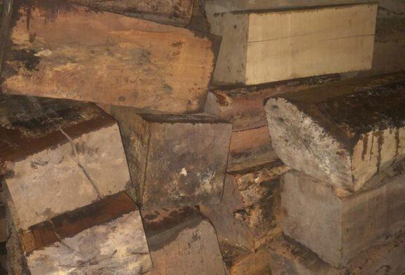 کشف انبار چوب آلات قاچاق در خطبه سرای تالش