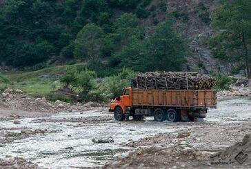 تشدید مقابله با قاچاق چوبآلات جنگلی در گیلان/ لزوم حفاظت از هیرکانی