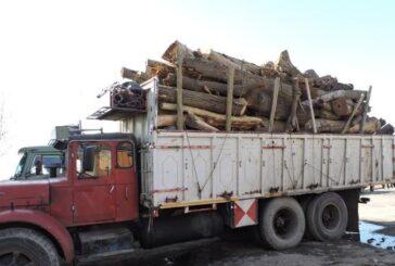 كشف چوب قاچاق