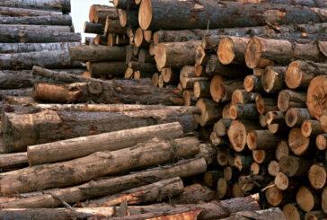 گرانی چوبآلات جنگلی و افزایش قاچاق آن در تالش