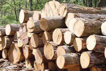 کشف ۱۰ تُن چوب قاچاق در حمیدیه