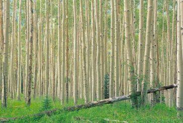 برگزاری کارگاه آموزشی توسعه زراعت چوب در جویم لارستان