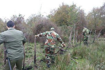 کشف و ضبط چوبآلات جنگلی قاچاق در شهرستان رودسر